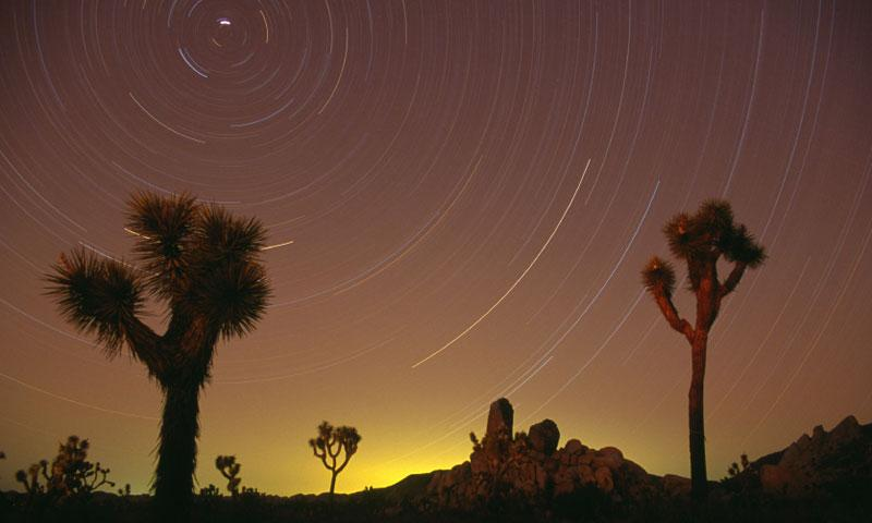 Stars in Joshua Tree National Park