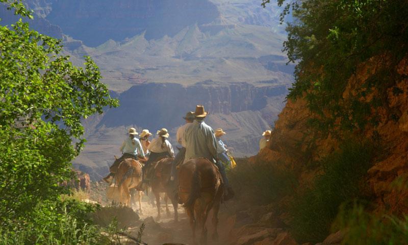 Grand Canyon Mule Trip