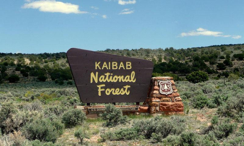 Kaibab National Forest borders Grand Canyon National Park